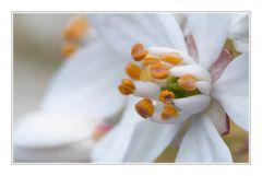 Wit bloempje 3