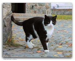 With Cat-Like Tread...