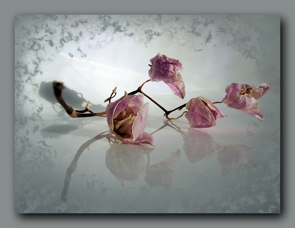 Withered orchid