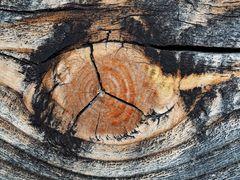 Witterungseinflüsse haben das Holz in ein Kunstwerk verwandelt! - De l'art sur du vieux bois...