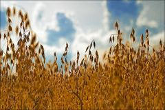Wittgenstein Im Feld auf dem Land