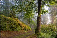 Wittgenstein Regenwälder