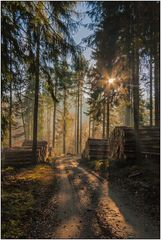 Wittgensteins Wälder