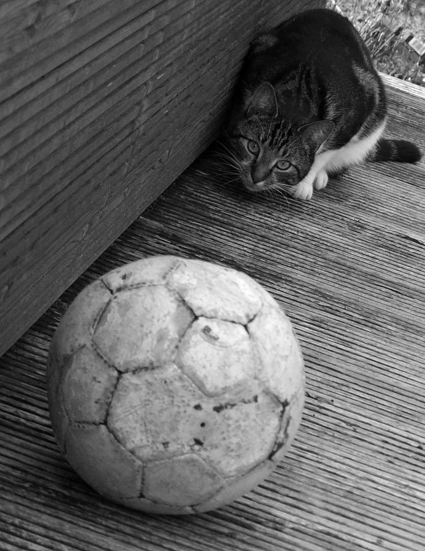 - WM 2010 -