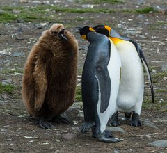 Wo bitte geht es hier in die Antarktis?