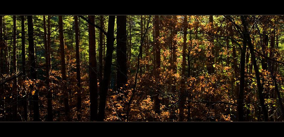 wo die Lichter in den Wäldern ..