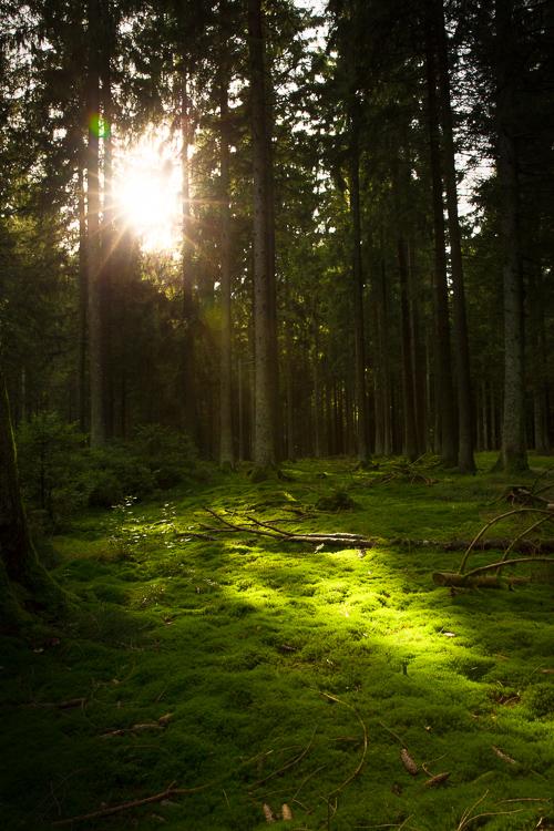 Wo die Waldfee wohnt