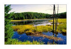 [wo du nicht überall warst] Algonquin Province Park