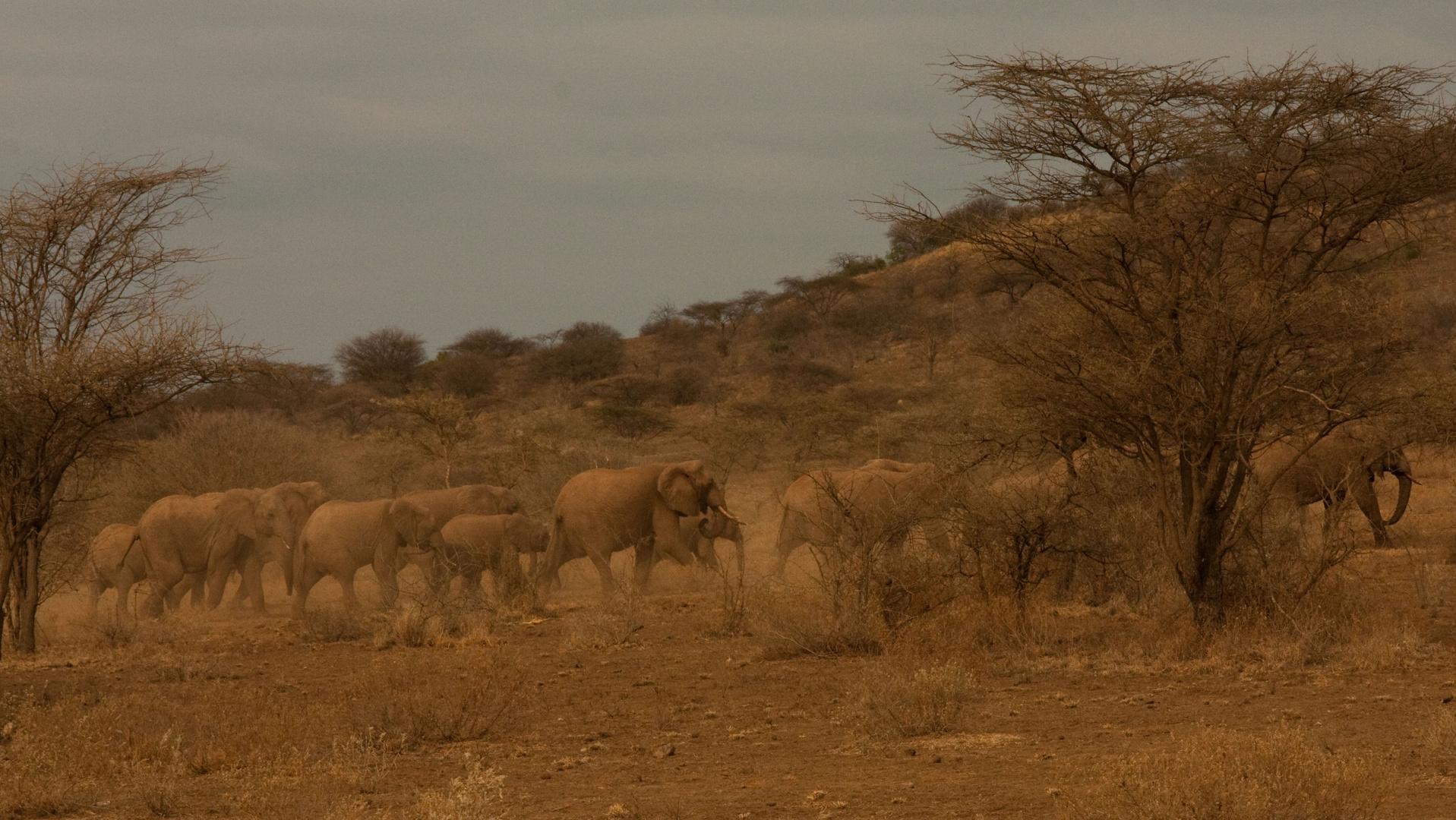 Wo Elefanten Vorfahrt haben...