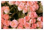 Wo gibt es schöne Blumen?