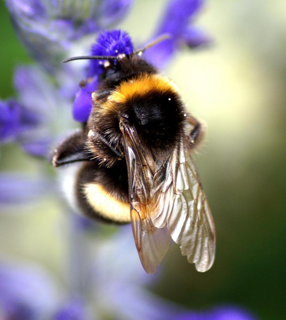 wo ist denn der honig
