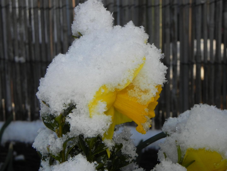 Wo ist der Frühling ?