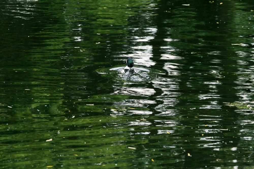 Wo ist die Ente ?