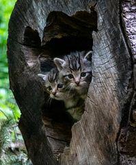 Wo ist Mama??