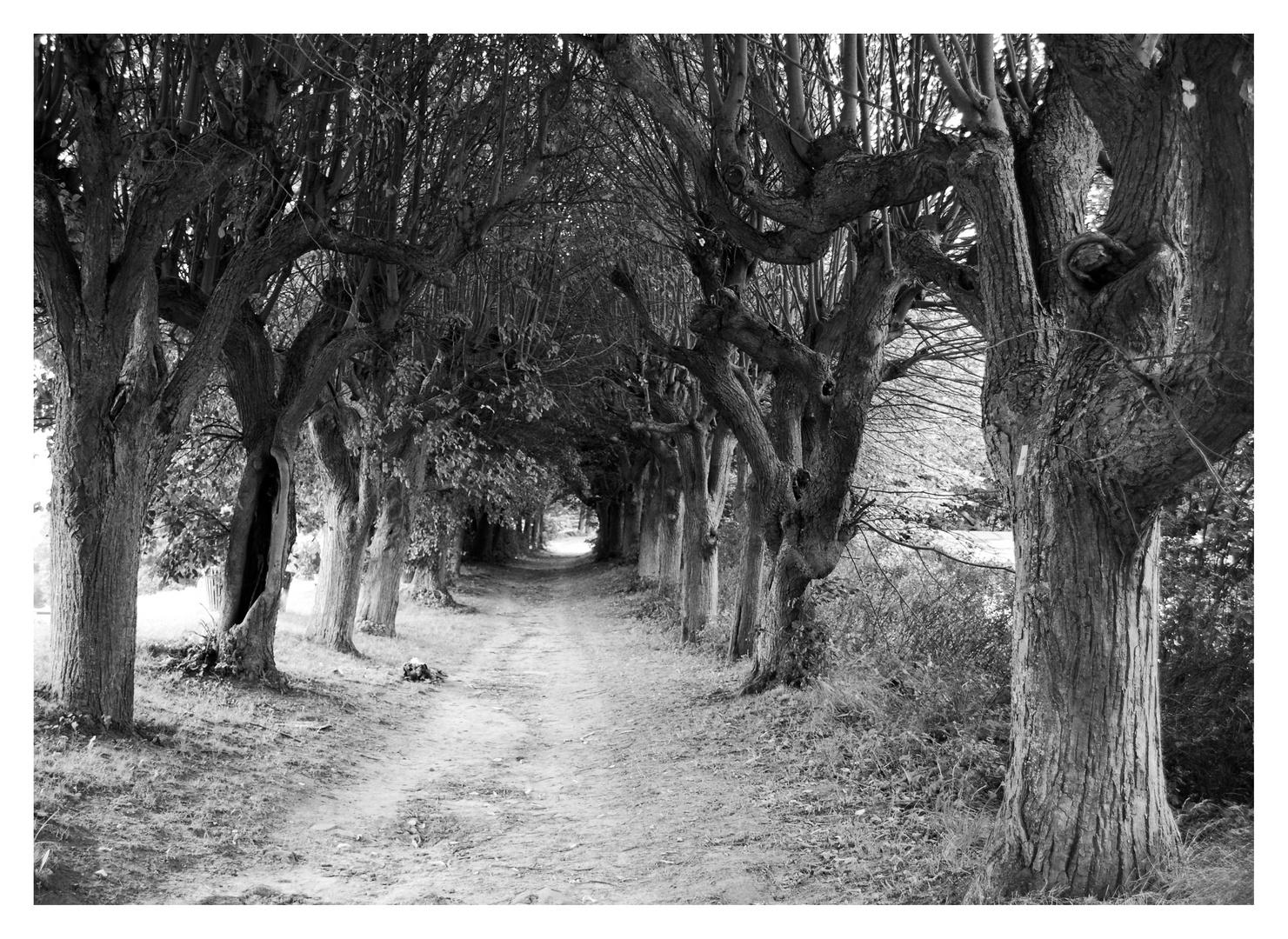 Wo mag der Weg nur hinführen....