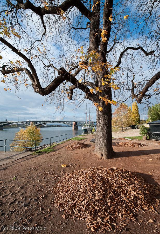 Wo sind all die Blätter hin? / Mainz 2009