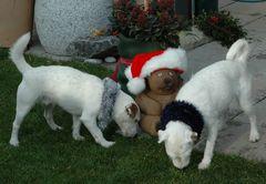 Wo sind jetzt die Leckerli vom Weihnachtsbär?