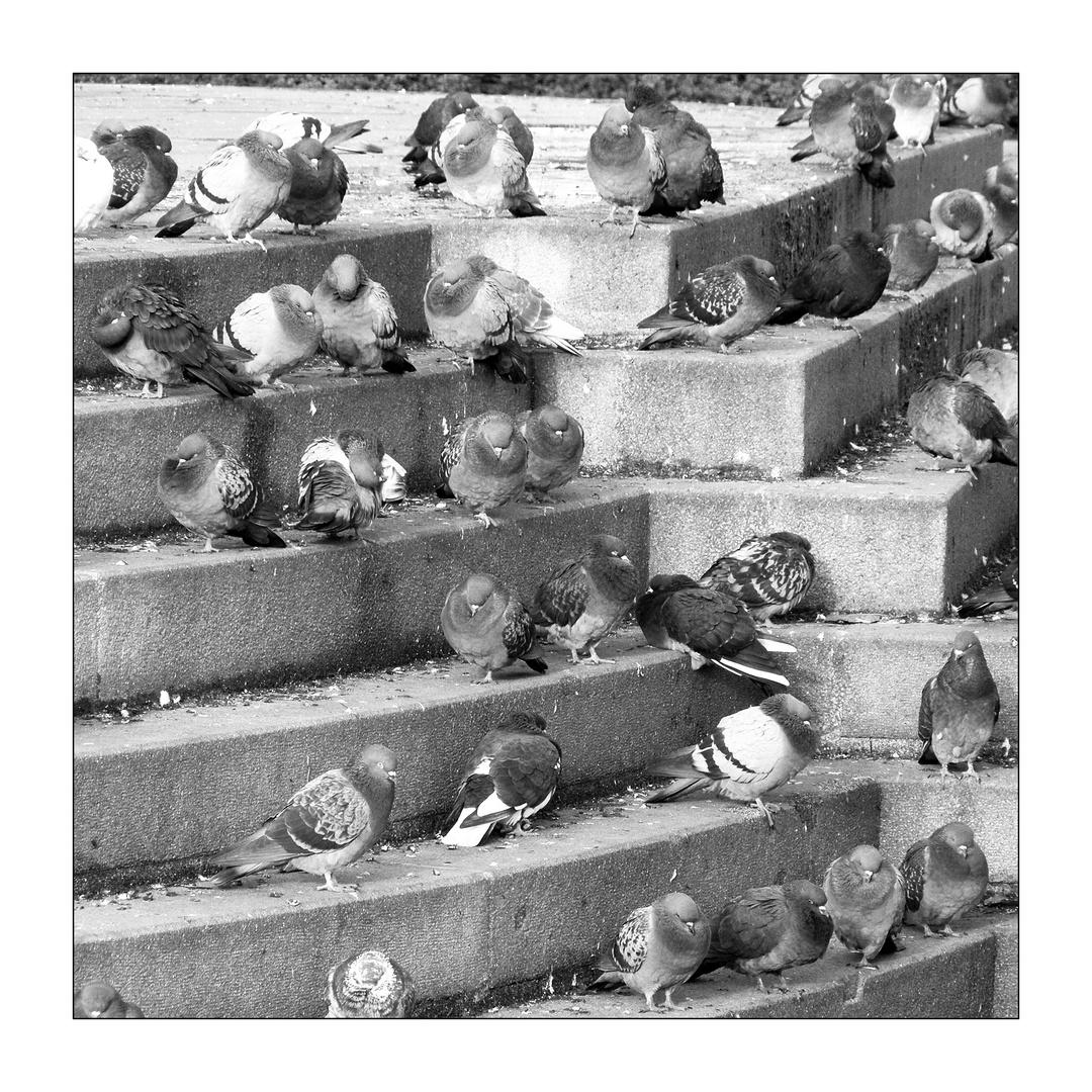 wo Tauben sind ...