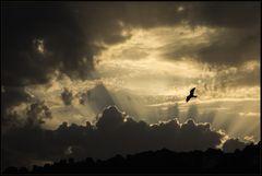 Wohin, meine Seele, steigst du empor ins Licht... ?
