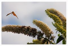 Wohin sind nur all die schönen Schmetterlinge....