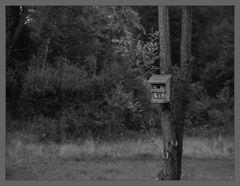 Wohnung für Pechvögel