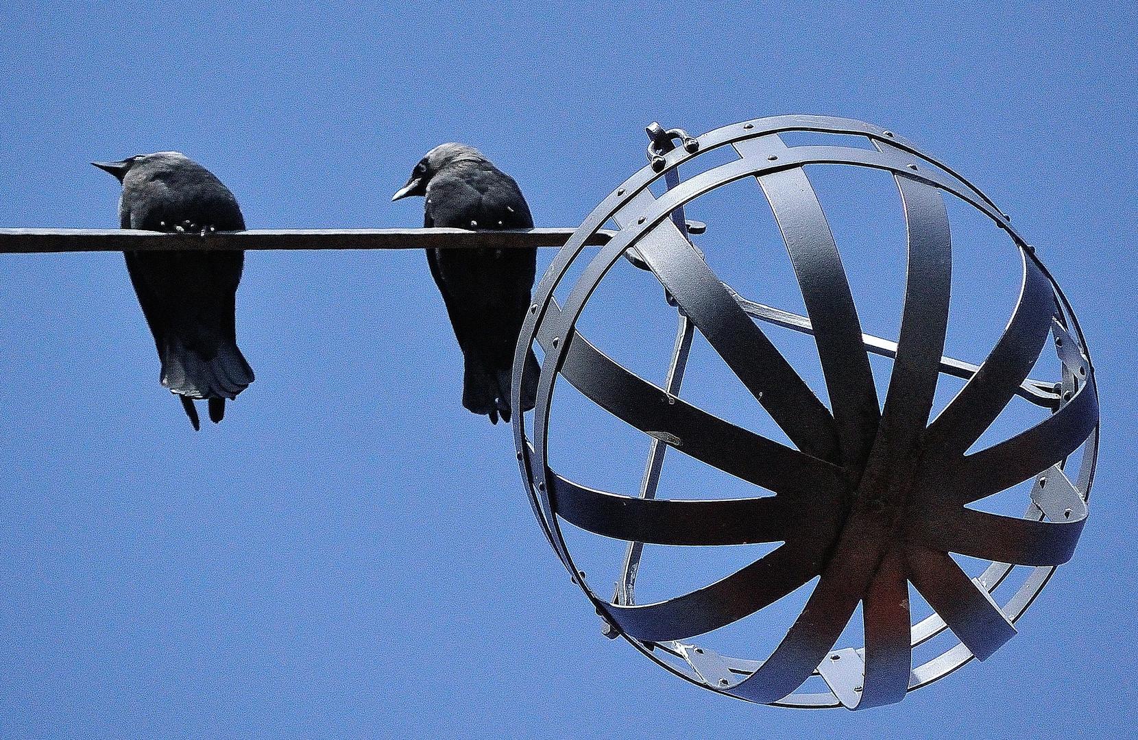 Wohnungssuche Foto Bild Tiere Wildlife Wild Lebende Vögel