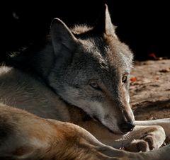 WOLF ART (2)