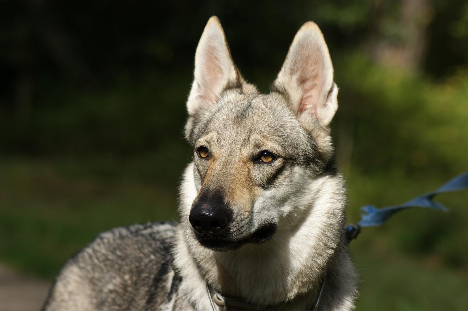 Wolf im Schafspelz ;)