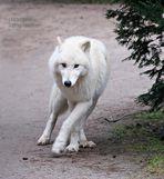 """Wolf Noran als """"Freigänger"""""""