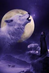 Wolf Queen PurePoison
