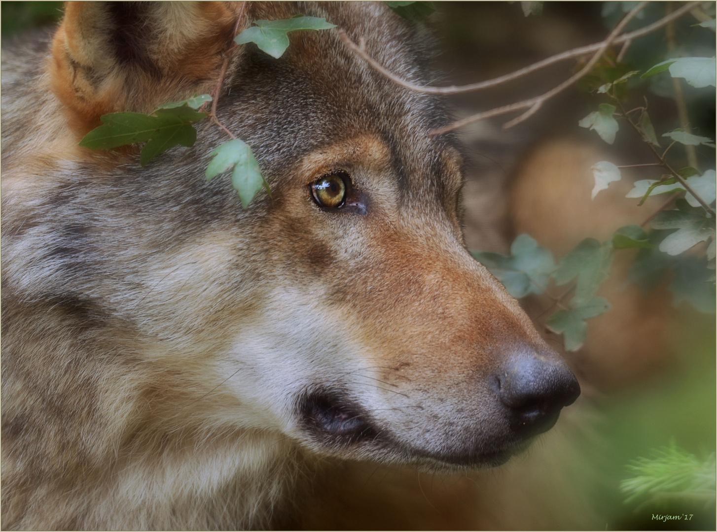 Wolf spirit ..