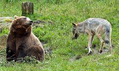 Wolf und Bär II