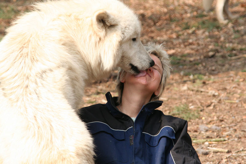 Wolf und Mensch - Vertrauen #1