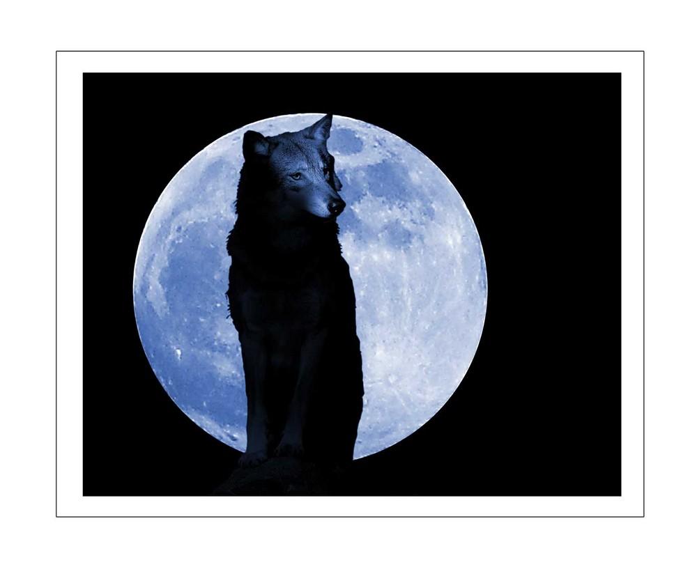 Wolf Zeit