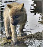 Wolfi hat schon den Schalk in den Augen...