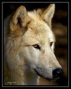 Wolfportrait