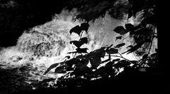 wolf's creek - detail