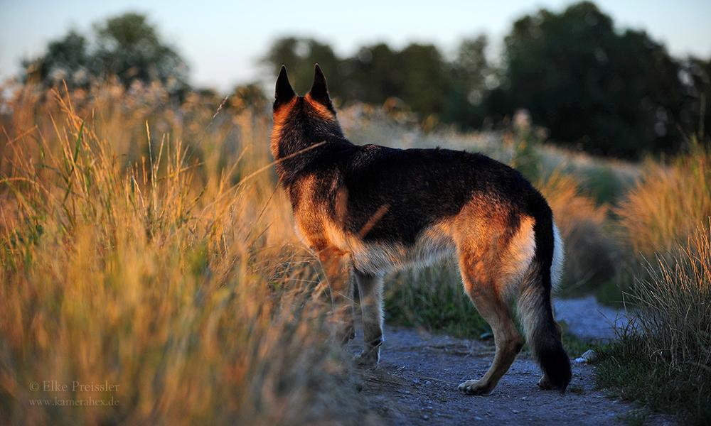 Wolfsblut...