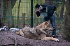 Wolfsfotografie...