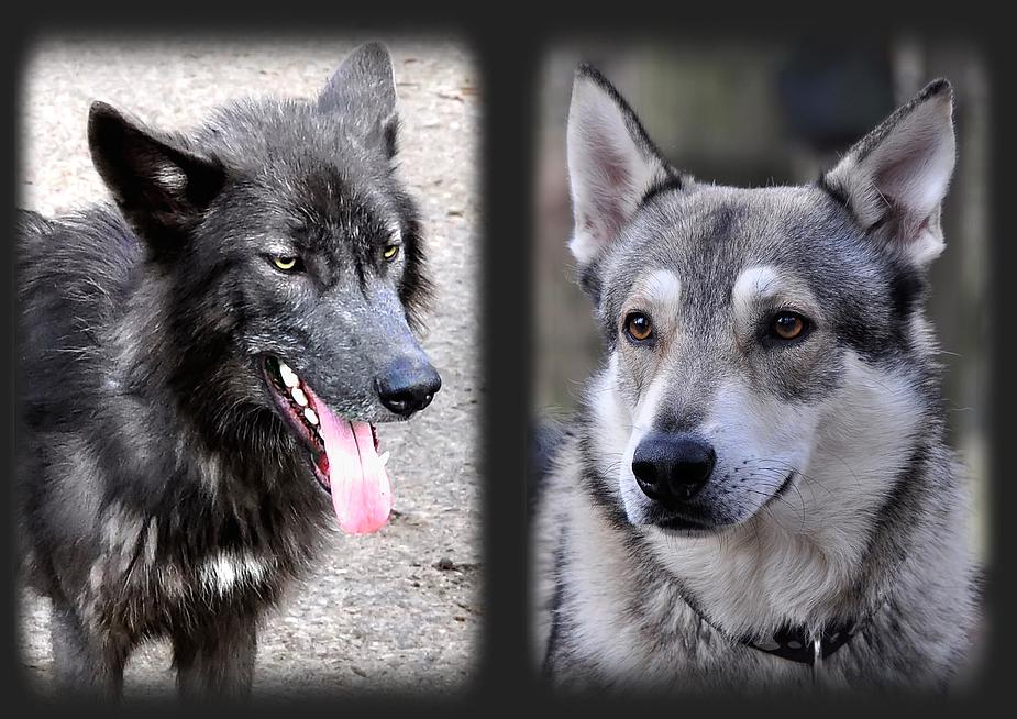 Hybrid Hund