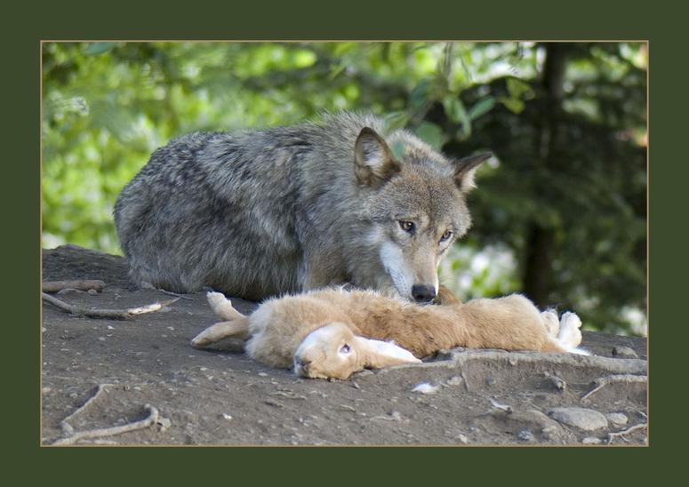 Wolfsmahlzeit II