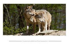 Wolfspaar #1