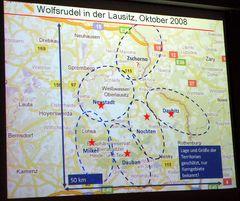 Wolfsregion Lausitz