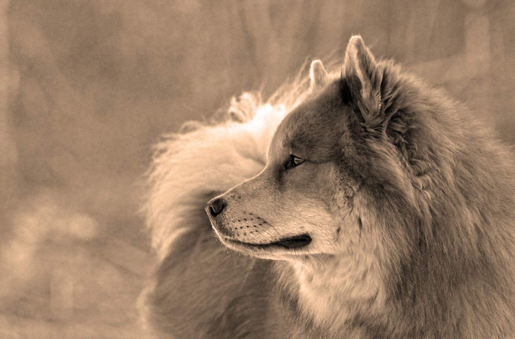 *wolfsseele*