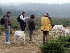 Wolfsspaziergang