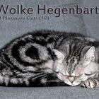 Wolke Hegenbarth of Platinum Cats