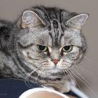 Wolke Hegendbarth of Platinum Cats (10)
