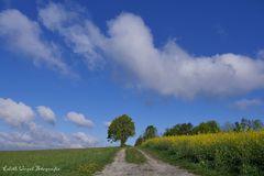 Wolken... Raps... Bäume...
