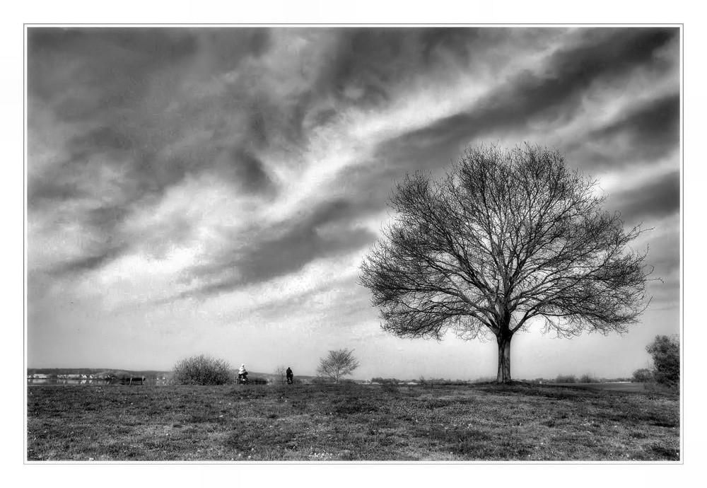 Wolken über meinem Baum ...