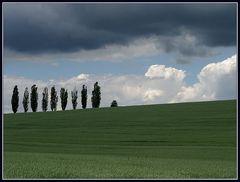 Wolkenbilder 4: Bäume auf Rasen